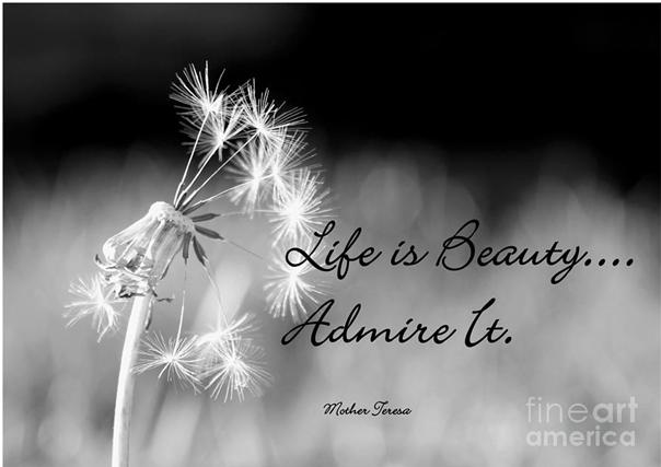 Life is beauty admire it