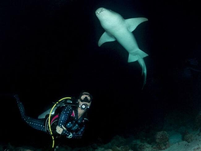 Night Dive in the Maldives