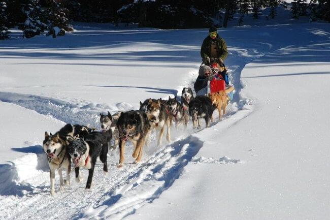 Ride With a Musher